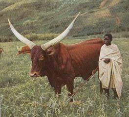 6 avril 1994 :Génocide au Rwanda Tutsi