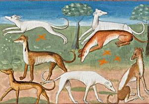 Gaston Phébus, Le Livre de la chasse : Le lévrier, XVe s., Chantilly, musée Condé