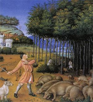 La glandée (le mois de novembre dans les Très riches Heures du duc de Berry, miniature du XVe siècle, musée Condé)