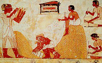 Scribes et fonctionnaires lèvent l'impôt en blé (tombe de Menna, Thèbes, 1300 avant JC)