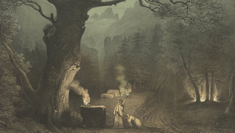 Des arbres et des hommes