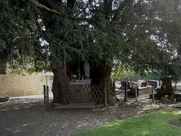 If millénaire à La Haye-de-Routot dans l'Eure. Une chapelle Notre-Dame de Lourdes se trouve au cœur de l'arbre. Les deux ifs de La Haye-de-Routot ont reçu le label « Arbre Remarquable de France » en juillet 2001.