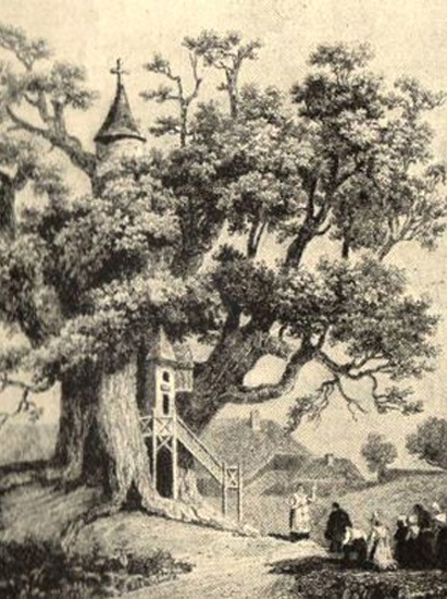 Chêne d'allouville belfosse, gravure, Pierre dufeuille, 1755, Mairie d'Allouville-Belfosse, Seine-Maritime.