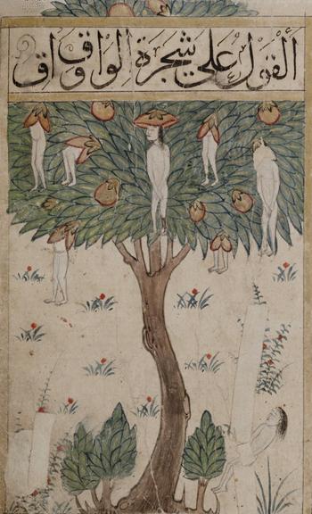 L'arbre Waq-waq, illustration extraite du manuscrit Kitab-al-Bulhan (Livre des Merveilles), XIV et XVe siècles.