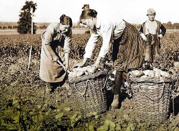 Affiche publiée en 1917 : le ramassage des pommes de terre dans le département de l'Oise. En agrandissement, des ouvrières peignent des obus de 75 mm dans un atelier de la fabrique, 31 mai 1917, Fort d'Aubervilliers, Seine-Saint-Denis, Ministère des Armées.