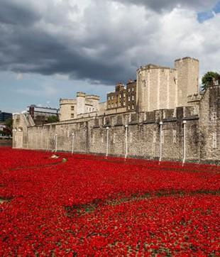 11 novembre 2014 : 800000 poppies autour de la tour de Londres rappellent les morts de la Grande Guerre (DR)
