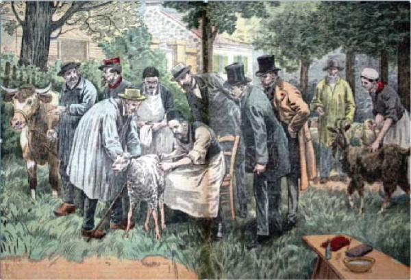 L'expérience de Pasteur à Pouilly-le-Fort le 5 mai 1881 (gravure du Pèlerin, 5 novembre 1922)