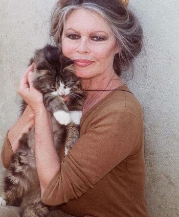 Brigitte Bardot (DR)