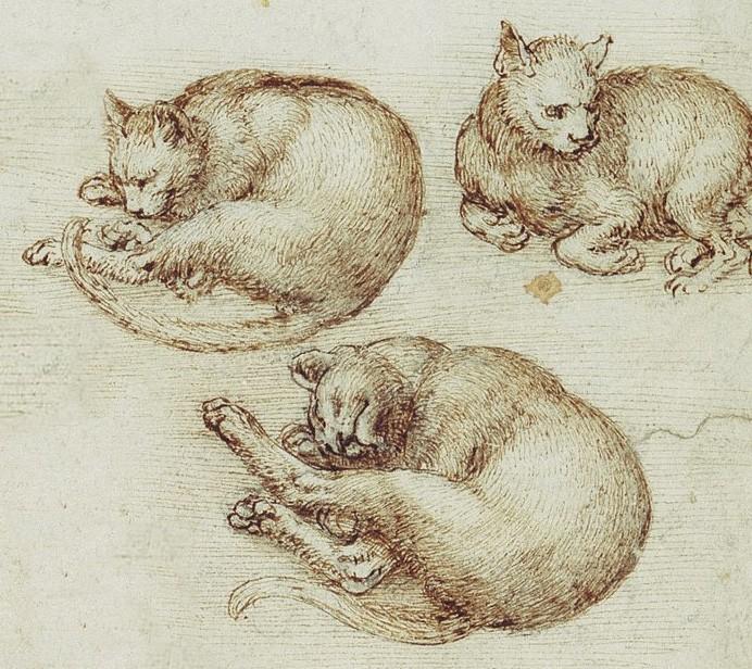 Esquisses, Léonard de Vinci, XVIe siècle.