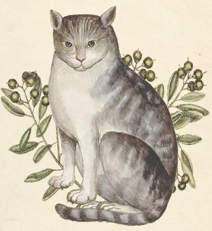 Le chat de Syrie décrit par Aldrovandi au 16ème siècle.