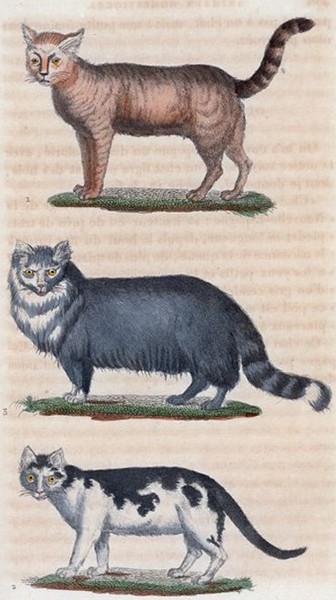 Œuvres complètes, Buffon, 1830, éd. F. D. Pillot, Paris.