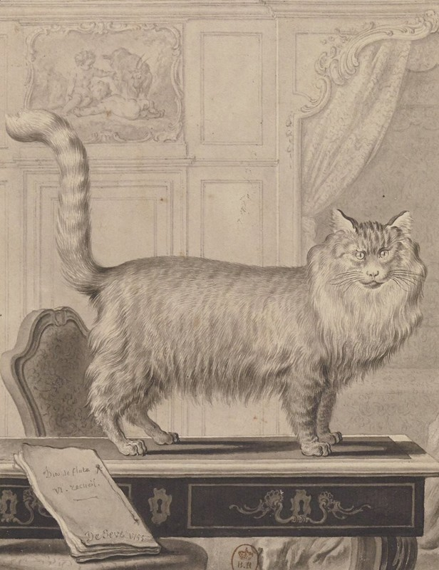 Le Chat d'Angora, illustration de l'ouvrage Histoire naturelle générale et particulière avec la description du cabinet du roy, tome VI, Georges Louis Leclerc, comte de Buffon, De Seeve (dessin), 1755, BnF, Paris.