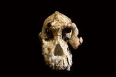 28 août 2019 : Les ancêtres de Lucy ont désormais une tête