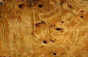 Figures dessinées par des enfants du paléolithique, grotte de Rouffignac, Dordogne.