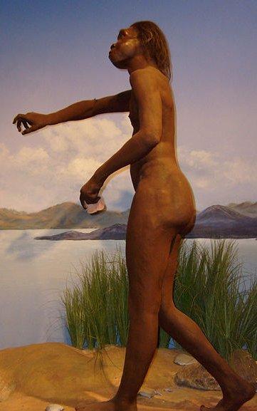 Reconstitution d'Homo ergaster, musée de l'Homme de San Diego, Californie.