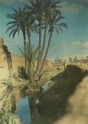 La palmeraie de Marrakech (photo de Gabriel Veyre, 1935), DR