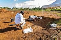 04 mai 2021 : Un site précolombien contenant 113 sépultures mis au jour en Guadeloupe