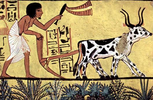 Scène de labour en Égypte ancienne, tombe de Sennedjem, XIIIe av. J.-C., Deir el Medineh, Égypte