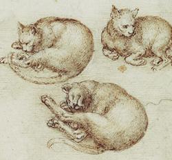 Chats (Léonard de Vinci)