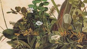 Touffe d'herbe, Albrecht Dürer